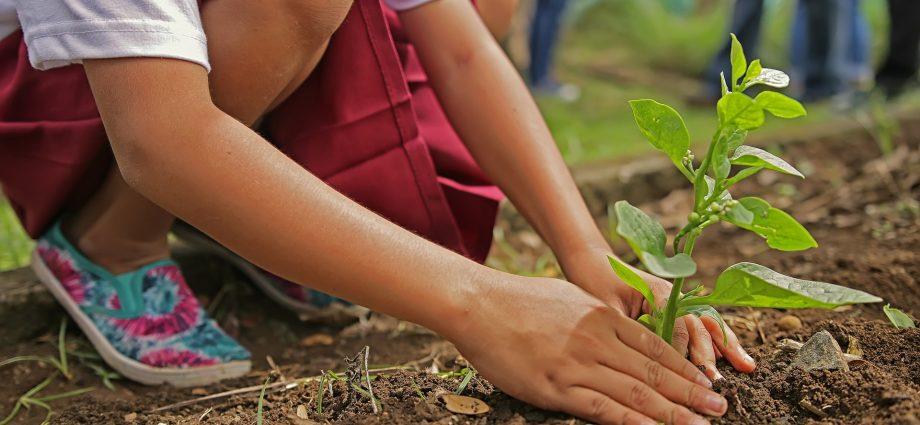 zöld kezdeményezés